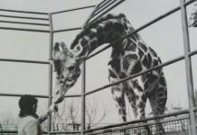 zoo di Brescia