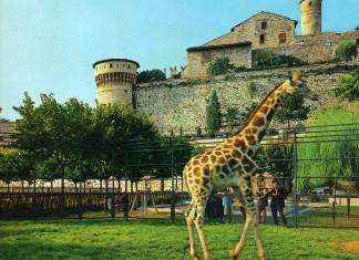 Cartolina viaggiata 1970 con le giraffe nel fossato del Castello