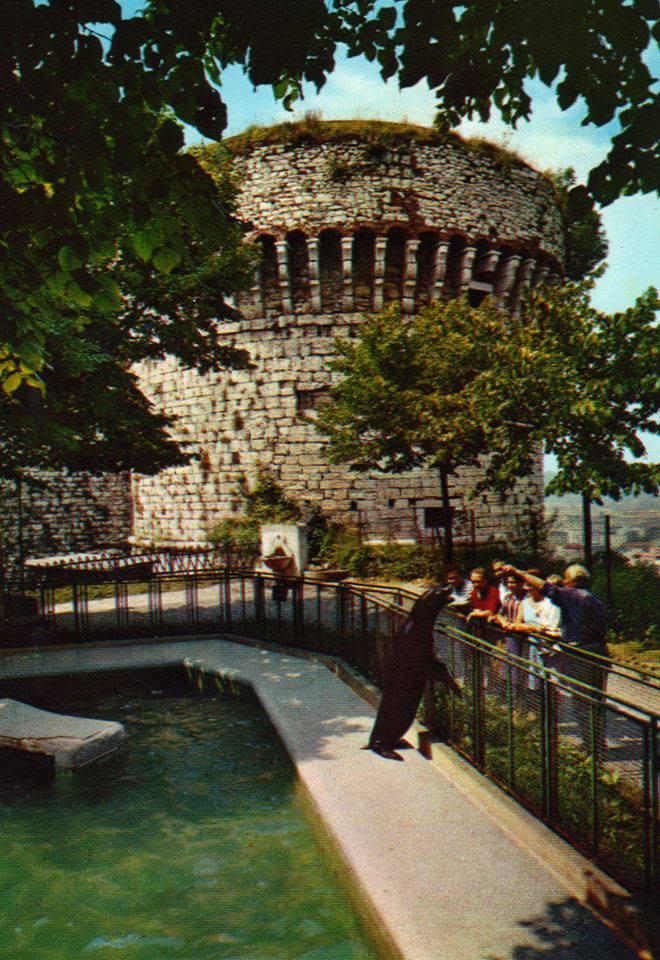 Zoo del Castello, Laghetto delle foche