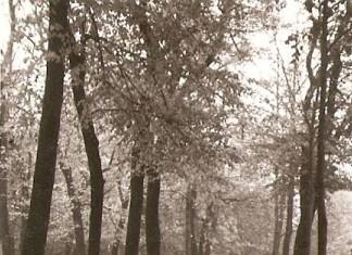 Passeggiata autunnale a Campo Marte, anni 50