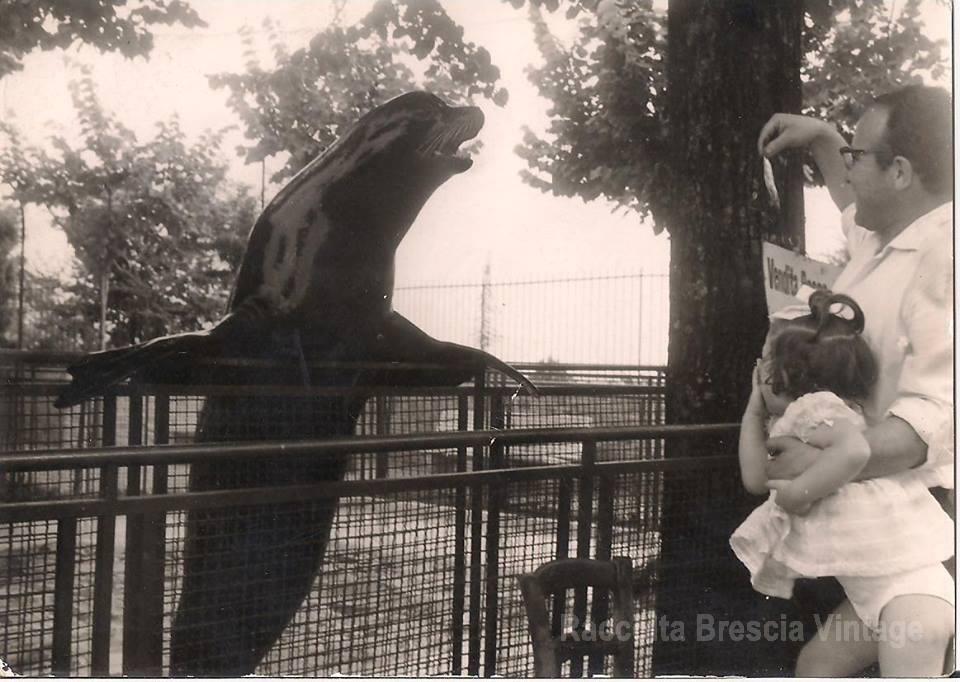 Lo zoo in Castello, 1961.