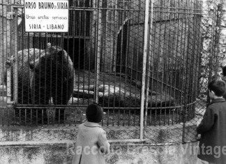 Lo zoo in Castello - L'orso bruno - 1963