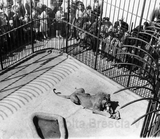 Lo zoo in Castello - Il leone - 1963