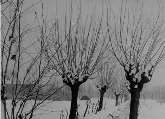 Nelle vicinanze di S.Eufemia - Inverno anni 50