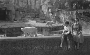 Giardino zoologico - L'orso