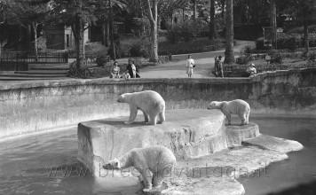Giardino zoologico - Gli orsi