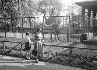 Lo zoo di Brescia - Le zebre