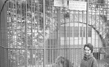 Lo zoo di Brescia - I leoni