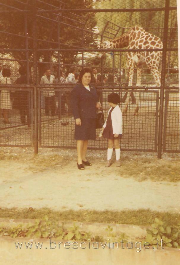Zoo di Brescia - La giraffa (anni '70)