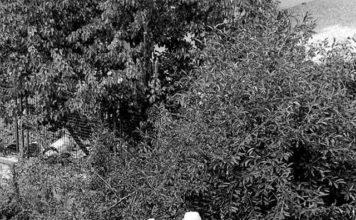 Muratori in via Stampatori