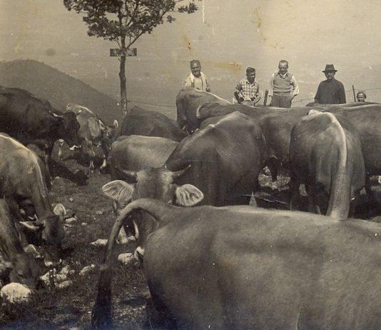 Alpeggio in Maddalena anni 1940